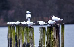 【英国湖区图片】A Complete Lake District--给你一个完整的英格兰湖区