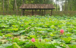 山东娱乐-微山湖湿地红荷风景区