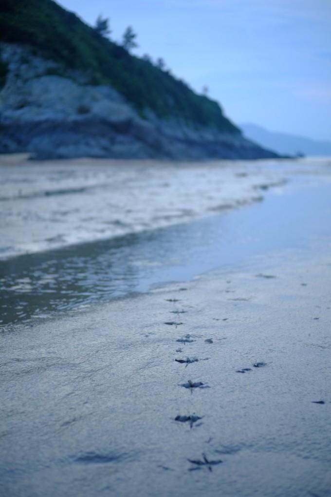 我们去看海岛星空萤火虫 ---------连云港 霞浦 嵛山岛 南靖土楼 鼓浪