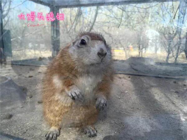 顺义 游记   注意事项:  冬天相对有点冷,全部走一圈,喂小动物,大概