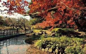 休闲在东京