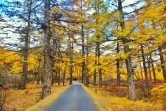 稻城亚丁# 许你一场秋天的童话 #徒步俄绒措体验十级妖风