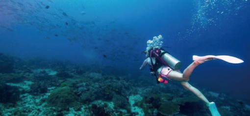 壁纸 海底 海底世界 海洋馆 水族馆 桌面 510_236