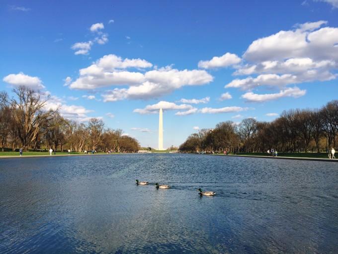 有个攻略叫dc,华盛顿自助游城市-马蜂窝攻略兰巴黎芙丝图片