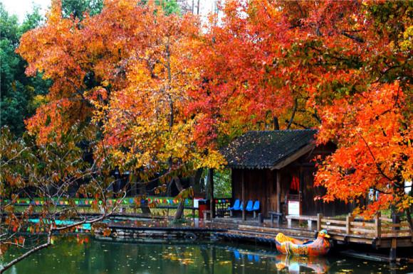 """苏州天平山风景名胜区,景区占地近百公顷,向以""""红枫,奇石,清泉""""三绝"""