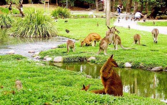 道格拉斯港的野生动物栖息地毗邻广袤的丹翠热带雨林,在这里有澳洲