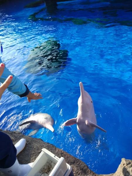 【长隆】● 广州野生动物园—珠海海洋王国 干