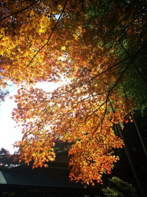 2016年11月日本红叶狩六日自由行游记(含攻略)图片