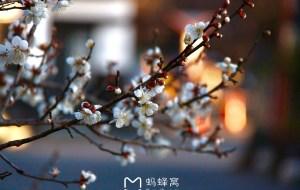 【汤布院图片】日本人气三大温泉小镇——九州汤布院