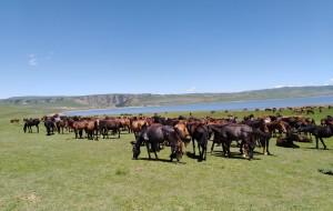 【山丹图片】三千年的草原只为等待您的到来