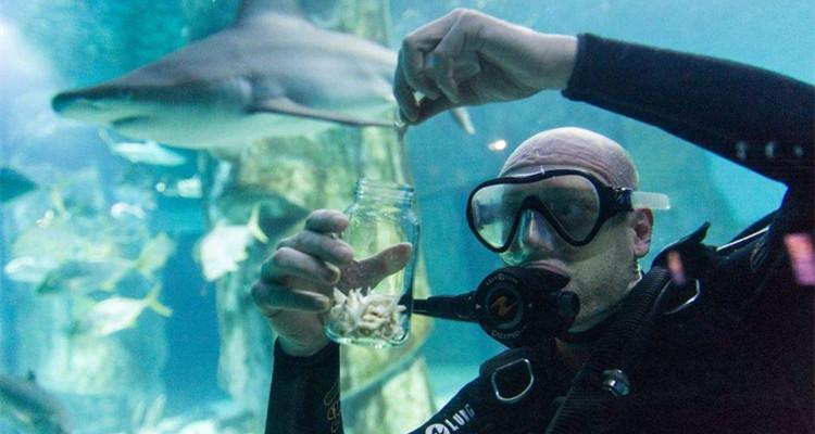 英国 伦敦 海洋生物水族馆 vip门票 (立即确认 幕后工作间参观)