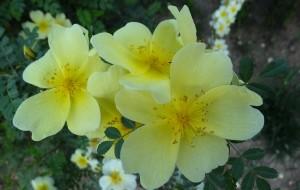 【郑州图片】路边花开       商都添彩------郑州街道广场和景观带花儿随拍