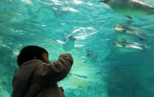 【广州长隆旅游度假区图片】田田宝宝的2周岁亲子游——珠海长隆