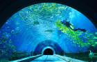 海棠湾·海底餐厅·鱼秀表演·360°环绕观看·情侣亲子首?。ㄖ藜示频旰O首灾绮?晚餐)