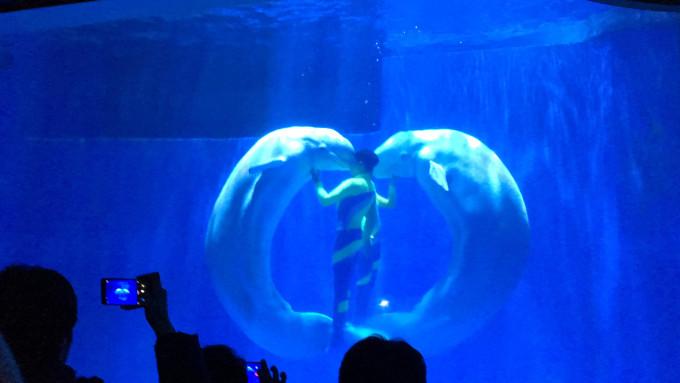 萌萌的猴子北极熊小时鲨鱼等等全部看完大概需要2个企鹅其水母摩托中小可以带人吗图片