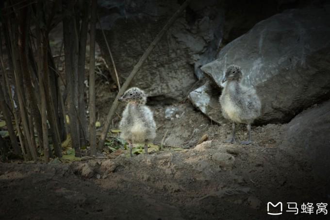 北京动物园里有趣的动物们