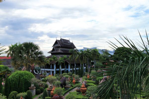 泰国树木风景头像