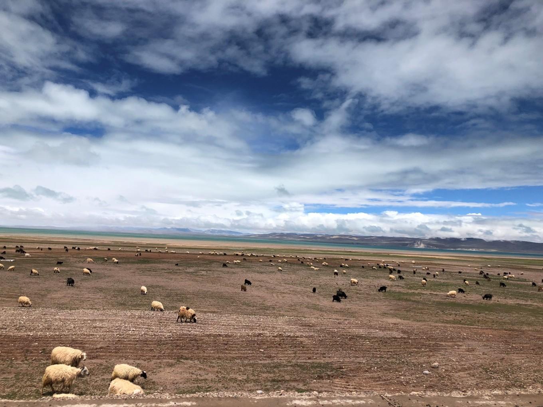 西藏--阿里,與您相伴的時光 120