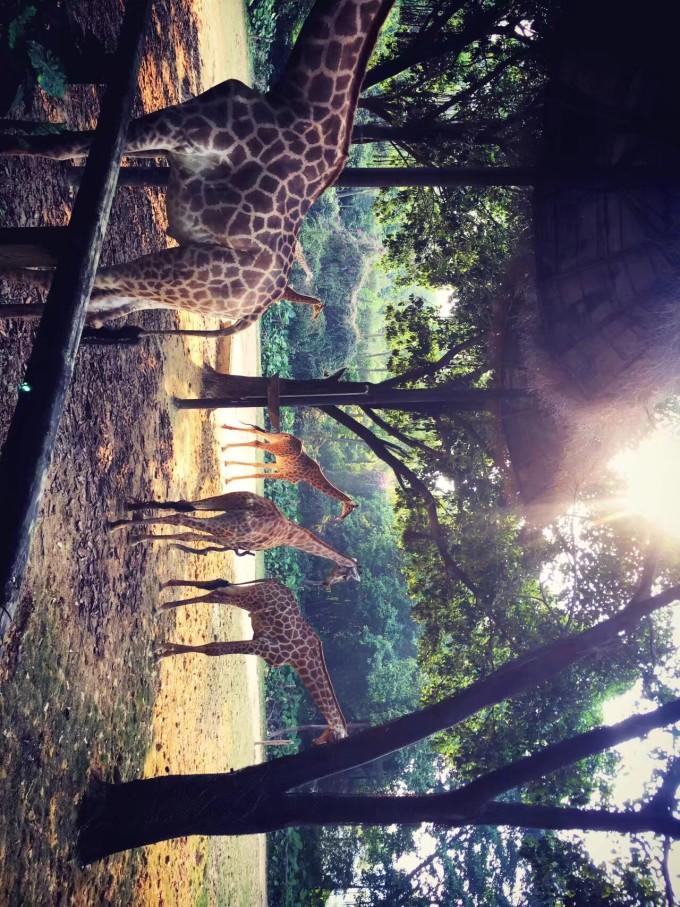 香江野生动物园,广州长隆旅游度假区旅游攻略 - 马蜂窝