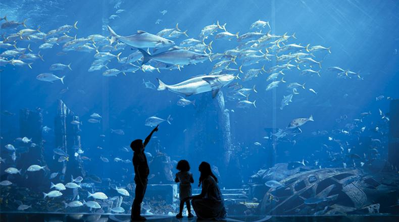 三亚亚特兰蒂斯失落的空间水族馆门票(提前1小时预订)图片