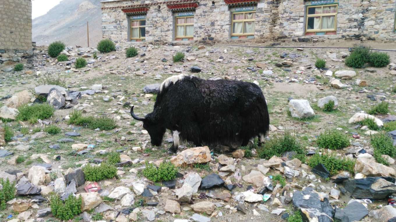 西藏--阿里,與您相伴的時光 47