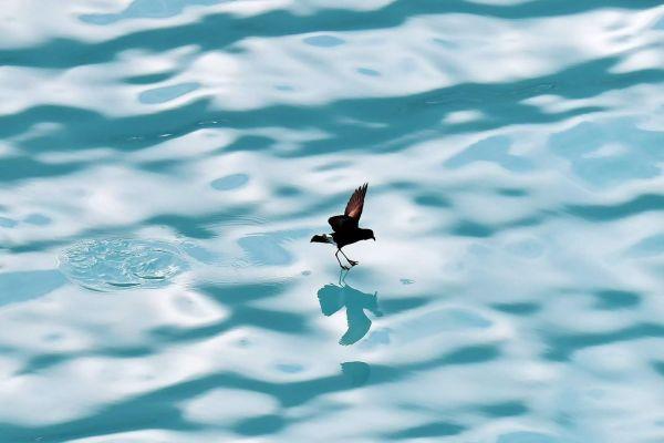 南极洲 游记  它们以鲸油和海洋小动物为食.