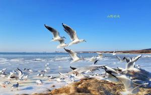【秦皇岛图片】北戴河的冬天有点像北极(手机拍摄)