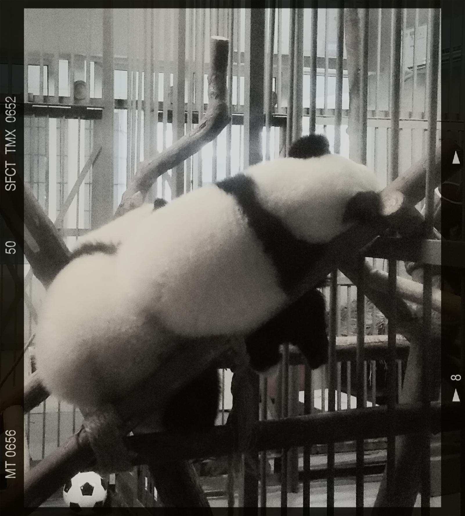 成都到重庆的狂欢――川行2