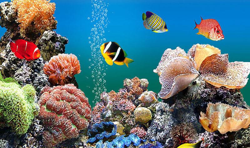 北京太平洋海底世界景区电子票 多种套餐可选
