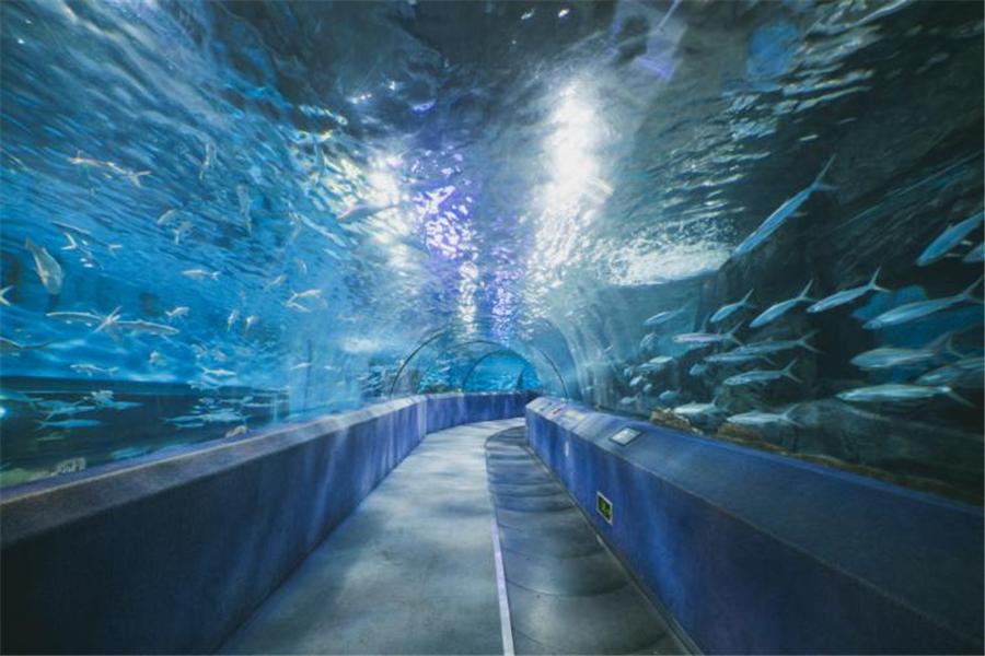 南京汉海海底世界,合肥汉海极地海洋世界三家海洋馆,而重庆汉海海洋