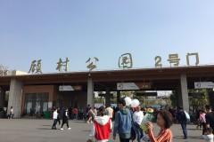 上海顾村公园看樱花