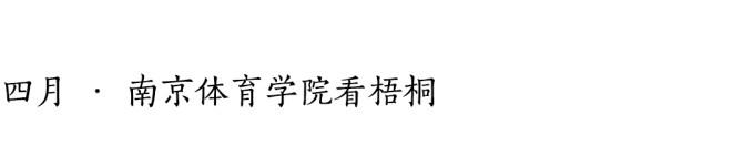 四月 · 南京体育学院看梧桐