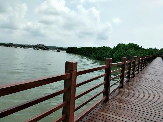 茂名水东红树林图片