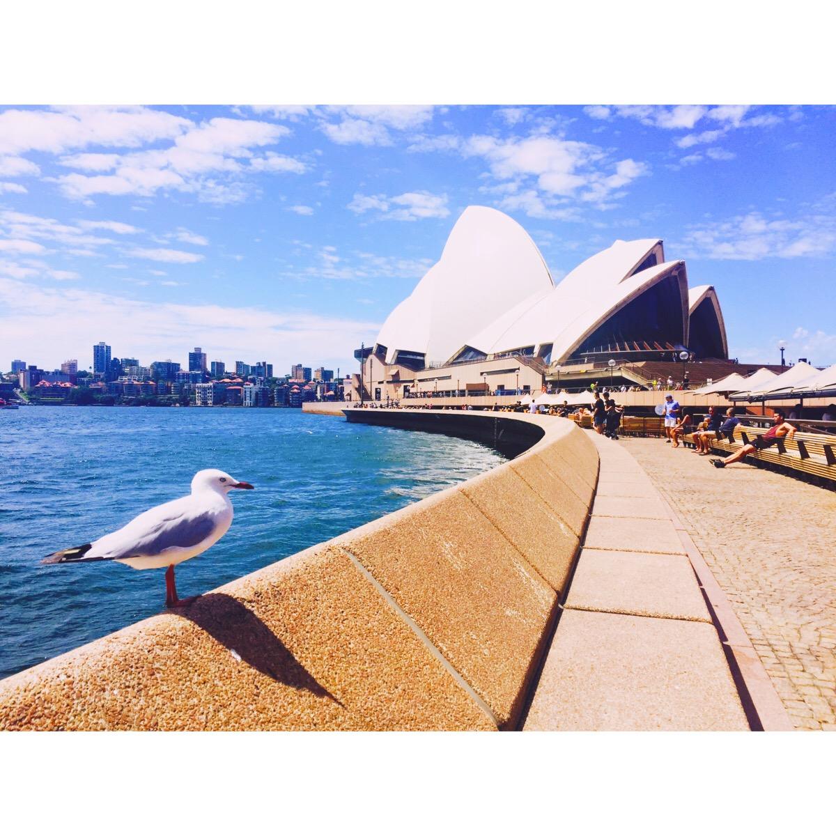 悉尼留学生分享的租房经验