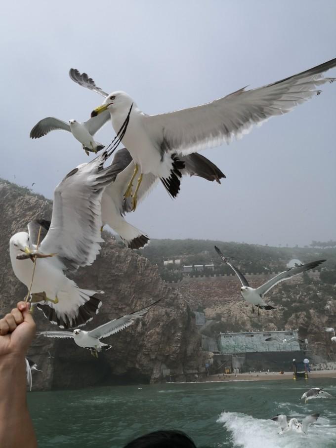 青岛威海烟台蓬莱,胶东半岛七日自驾游攻略