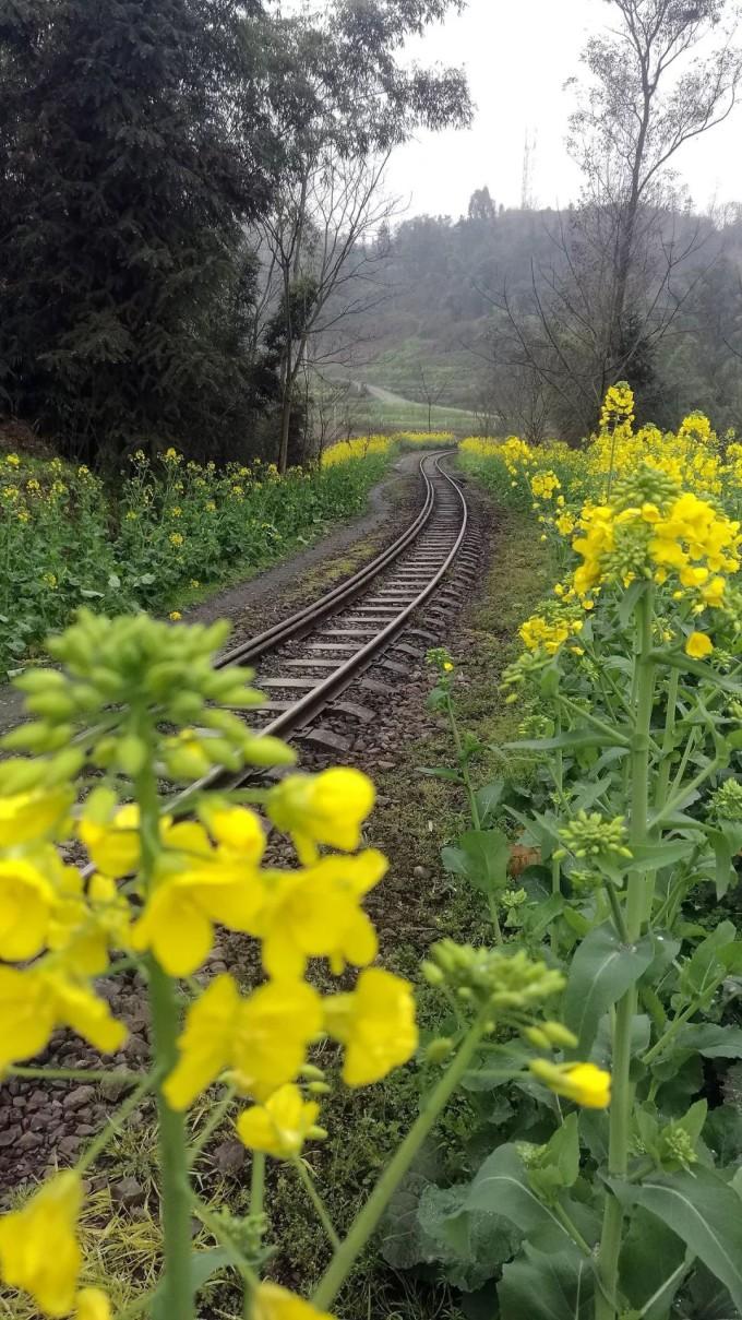 春天里的小火车