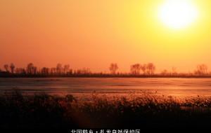 【齐齐哈尔图片】【北国鹤乡】-纯摄影。群友摄鹤,日落扎龙