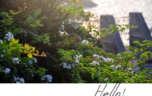 【嵊泗图片】Hello! 嵊泗