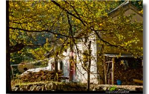 【河南图片】又到秋黄叶落时