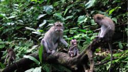 巴厘岛景点-圣猴森林公园(Sacred Monkey Forest Sanctuary)