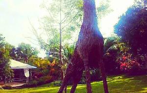 薄荷岛美食-Tarsier Botanika Park