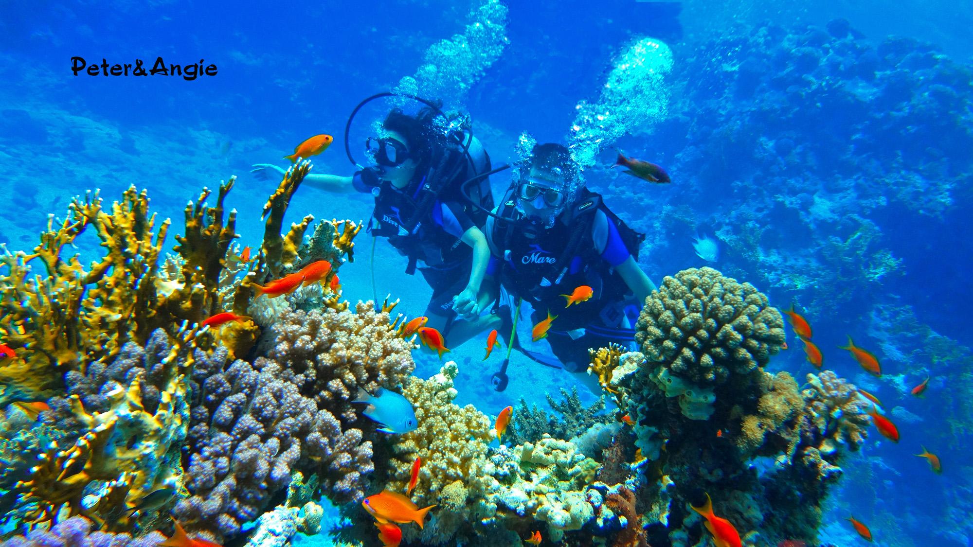 红海潜水俱乐部