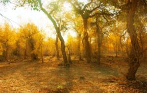 【塔克拉玛干沙漠图片】塔里木·胡杨林