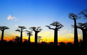 【马达加斯加图片】狐猴、变色龙及猴面包树的国度—马达加斯加!