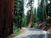 红杉国家公园