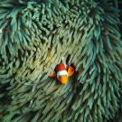 马达京岛攻略图片