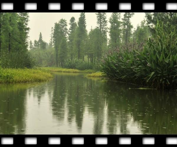 西溪,乌镇,上海,周庄攻略九天自由行!稻城亚丁自助游湿地6月图片