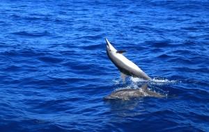 花莲娱乐-赏鲸