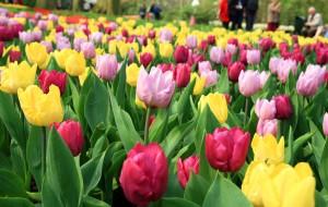 【羊角村图片】《春天在荷兰》 六日自由行游记