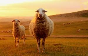 【正蓝旗图片】内蒙古正蓝旗锡林郭勒盟 - 做客牧民家